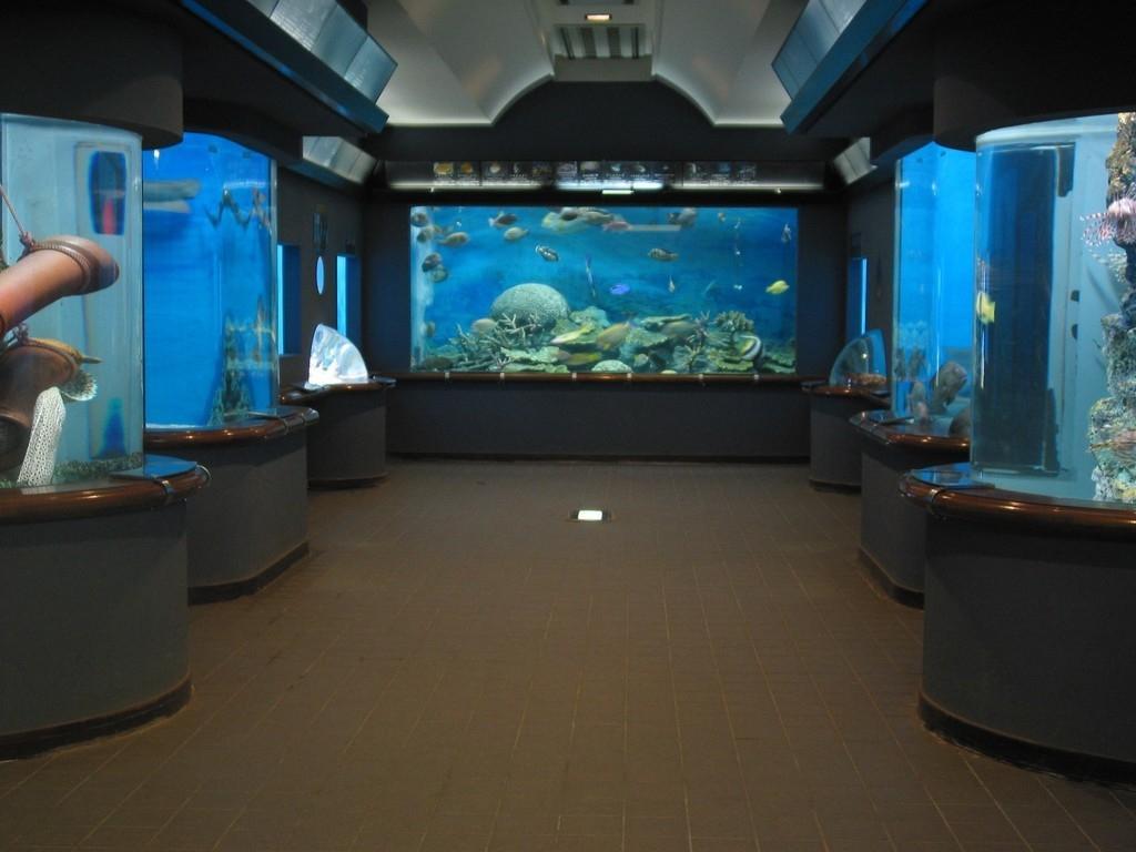 渋川 マリン 水族館